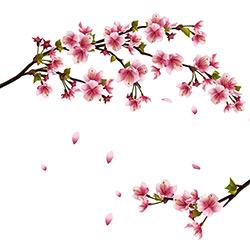 Qual o significado das flores de cerejeira