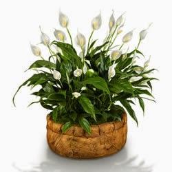 Qual o significado das flores no Feng Shui