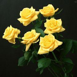 Qual O Significado Das Rosas Amarelas Significadodasflorescom